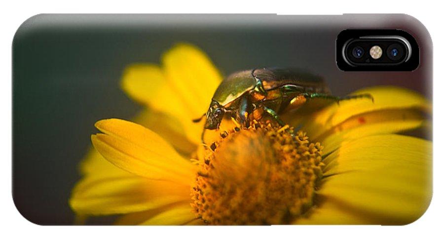 June IPhone X Case featuring the photograph June Beetle Exploring by Douglas Barnett