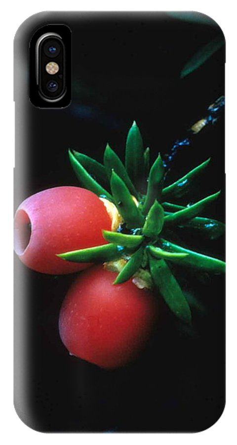 Juniper Berries IPhone X Case featuring the photograph Juniper Berries by Laurie Paci