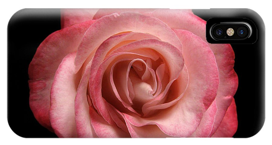 Pink Rose IPhone X / XS Case featuring the photograph Just A Rose by Peter Piatt