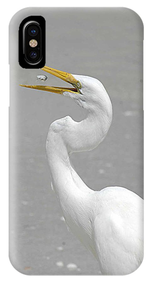 Egret IPhone X Case featuring the photograph Just A Snack by Keith Lovejoy