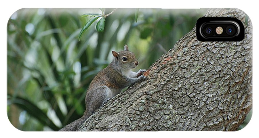 Squirrels IPhone Case featuring the photograph Just Chilling Out by Rob Hans