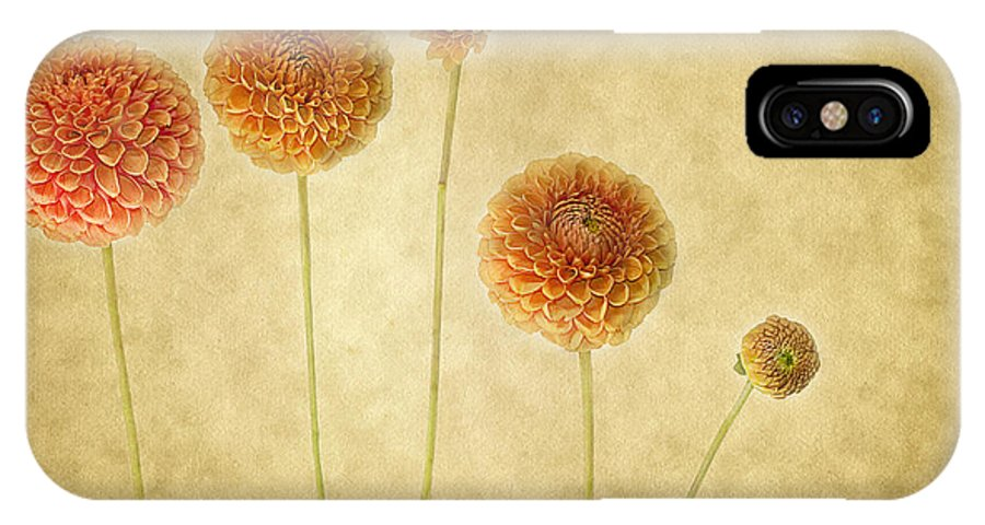 Dahlias IPhone X Case featuring the photograph Just Dahlia-ing Around by Rebecca Cozart