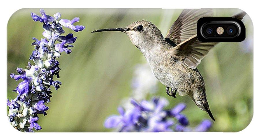Annas Hummingbird IPhone X Case featuring the photograph Just Hovering by Saija Lehtonen