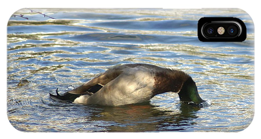 Duck IPhone X Case featuring the photograph Just One More Peek by Debbie May