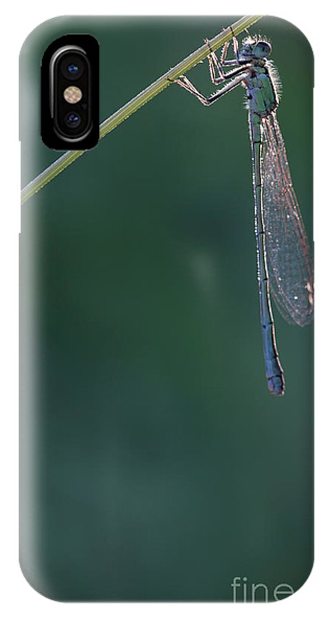 Dragonfly IPhone X Case featuring the photograph Just Relax by Jana Behr
