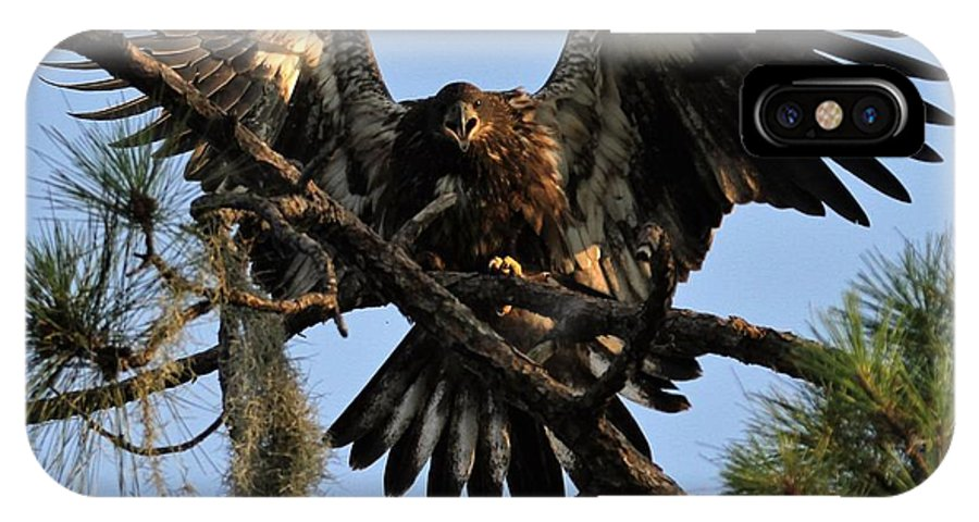 Fl IPhone X Case featuring the photograph Juvenile Bald Eagle by Kelly Kennon