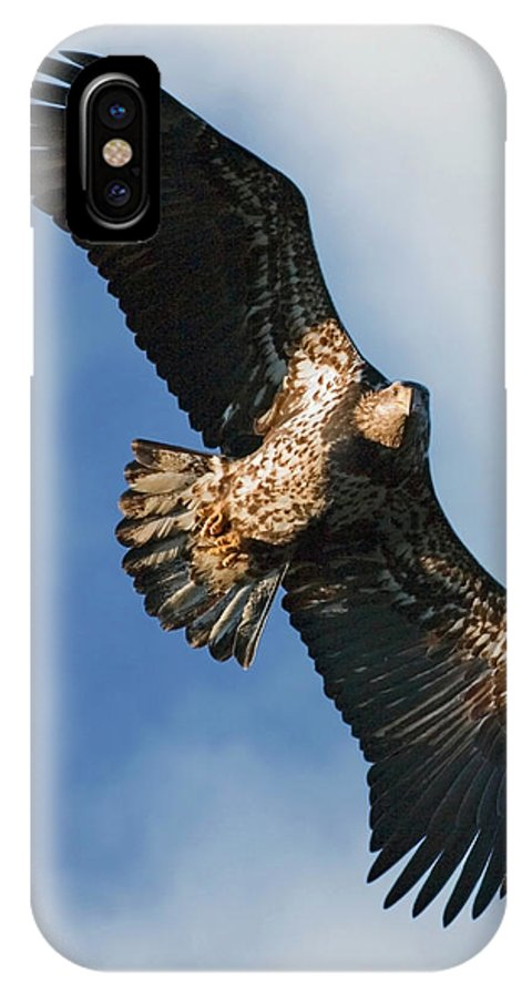 Bald Eagle IPhone X Case featuring the photograph Juvenile Bald Eagle Two by Randall Ingalls
