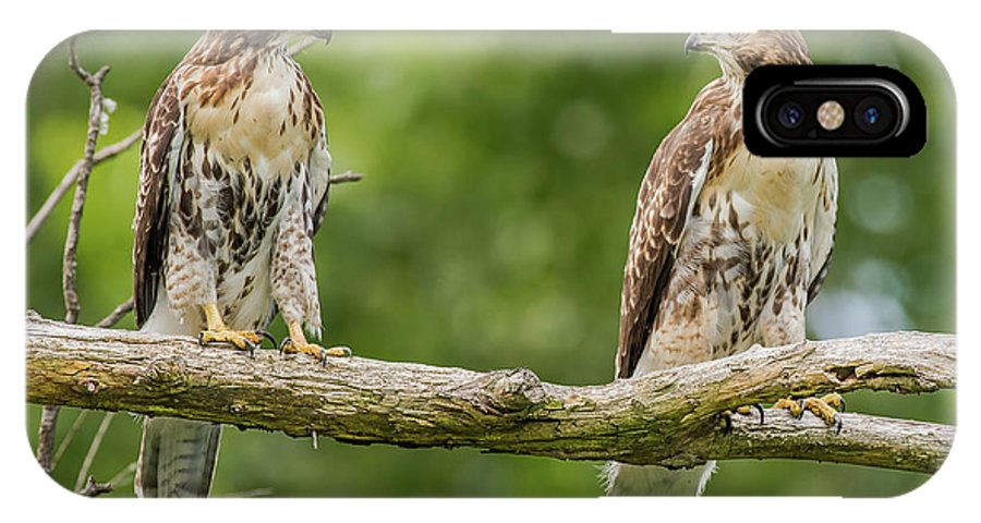 Juvenile Red-tailed Hawks Eyeing Each Other IPhone X Case featuring the photograph Juvenile Red-tailed Hawks Eyeing Each Other by Morris Finkelstein