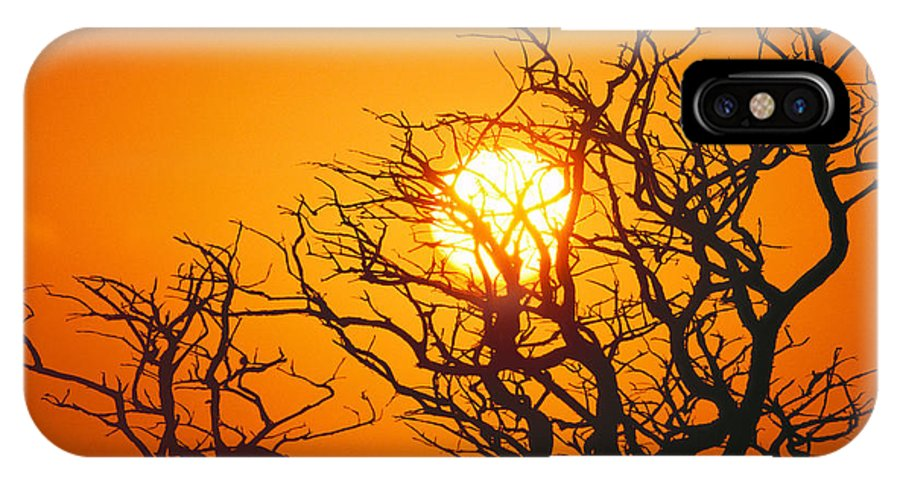 Afternoon IPhone X Case featuring the photograph Keawe Tree At Sunset by Allan Seiden - Printscapes