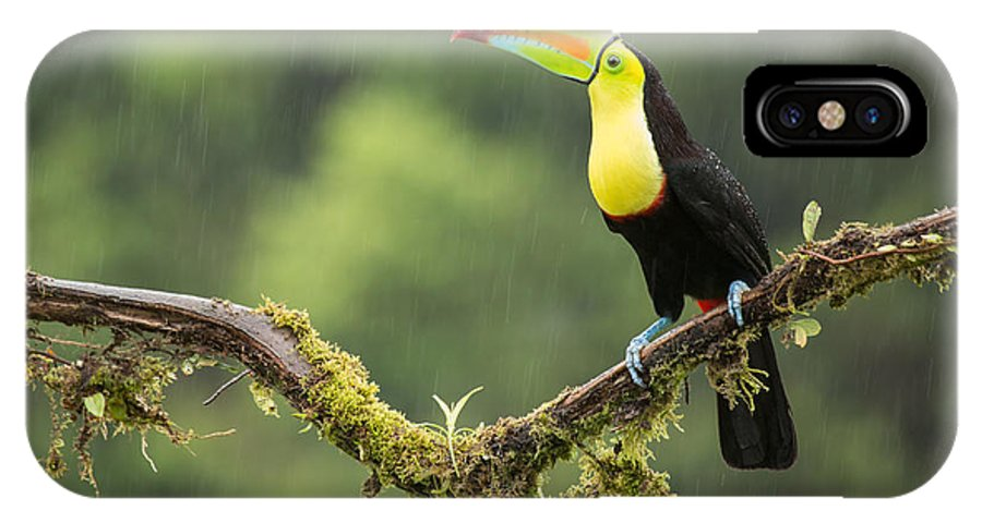 Birding IPhone X Case featuring the photograph Keel-billed Toucan Perched Under The Rai by Chris Jimenez