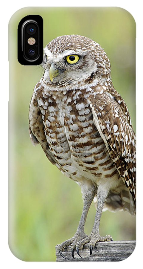 Owls IPhone X Case featuring the photograph Keeping Watch by Keith Lovejoy