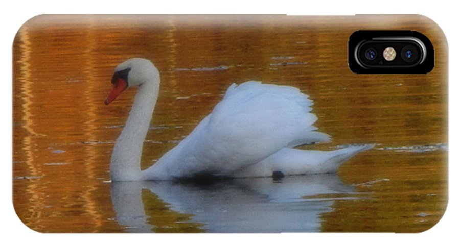 Swan IPhone X / XS Case featuring the photograph Kensingtons Swan 1 by September Stone
