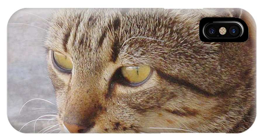 Cat IPhone X / XS Case featuring the photograph King Cat by Ian MacDonald