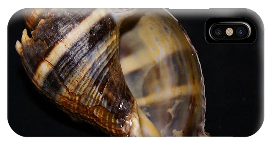 Shells IPhone X Case featuring the photograph King Conch 3 - Photosbydm by Debbie May