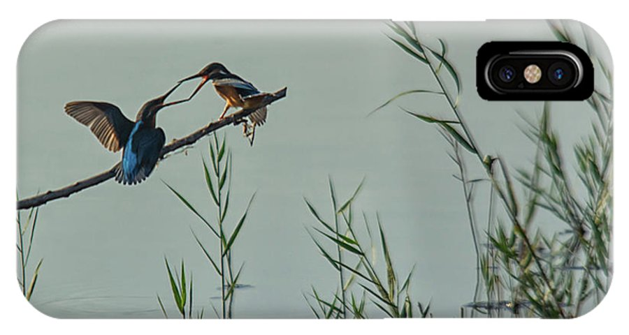 Black Sea Coast IPhone X Case featuring the photograph King Fishers by Cliff Norton