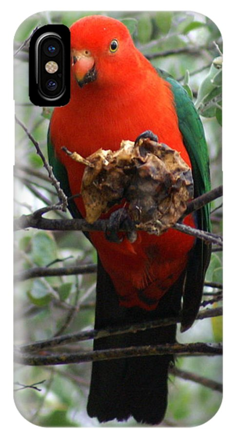 Parrot IPhone X Case featuring the photograph King Parrot by Brian Leverton
