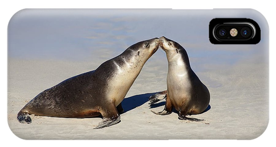 Sea Lion IPhone X Case featuring the photograph Kiss by Mike Dawson