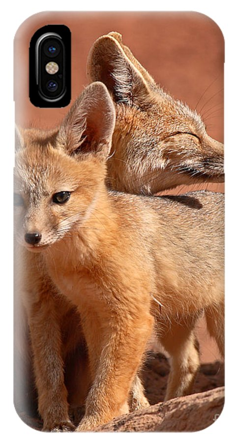 Fox IPhone X Case featuring the photograph Kit Fox Mother Looking Over Pup by Max Allen