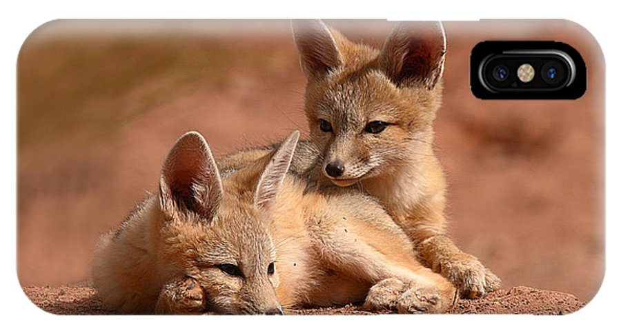 Fox IPhone Case featuring the photograph Kit Fox Pups On A Lazy Day by Max Allen