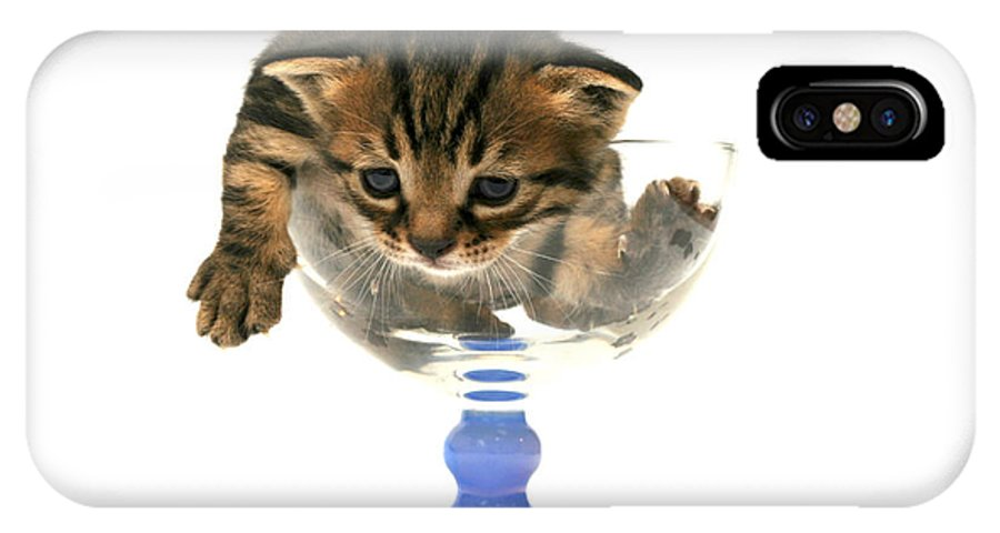 Cat IPhone X Case featuring the photograph Kitten Sits In A Glass by Yedidya yos mizrachi