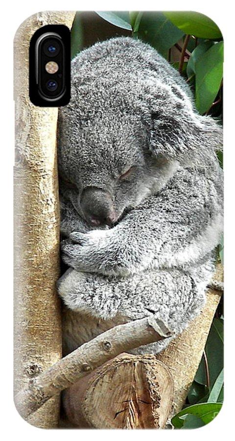 Koala IPhone X Case featuring the photograph Koala by Carol Bradley