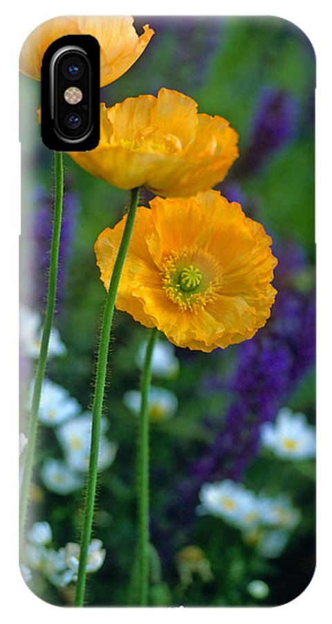 Flowers IPhone X Case featuring the photograph La Playa Poppies by Kathy Yates