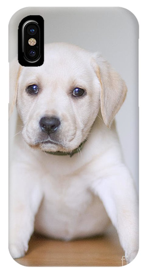 Labrador IPhone X Case featuring the painting Labrador by Romeo Lombardi