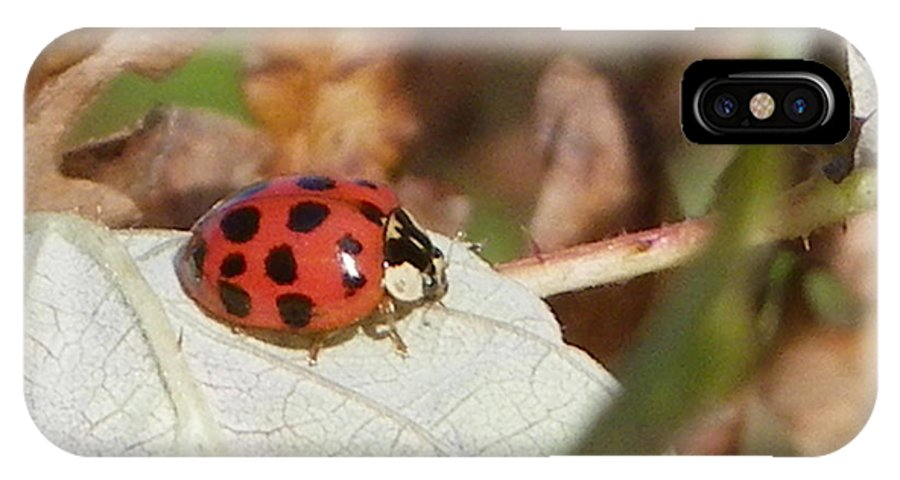 Nature IPhone X Case featuring the photograph Lady Bug by Peggy King