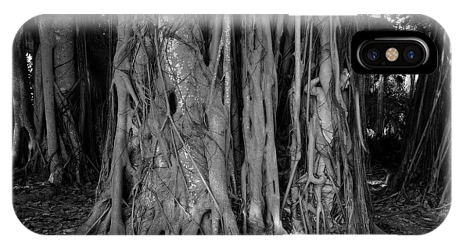 Banyan Trees IPhone X Case featuring the photograph Lady In The Banyans by David Lee Thompson