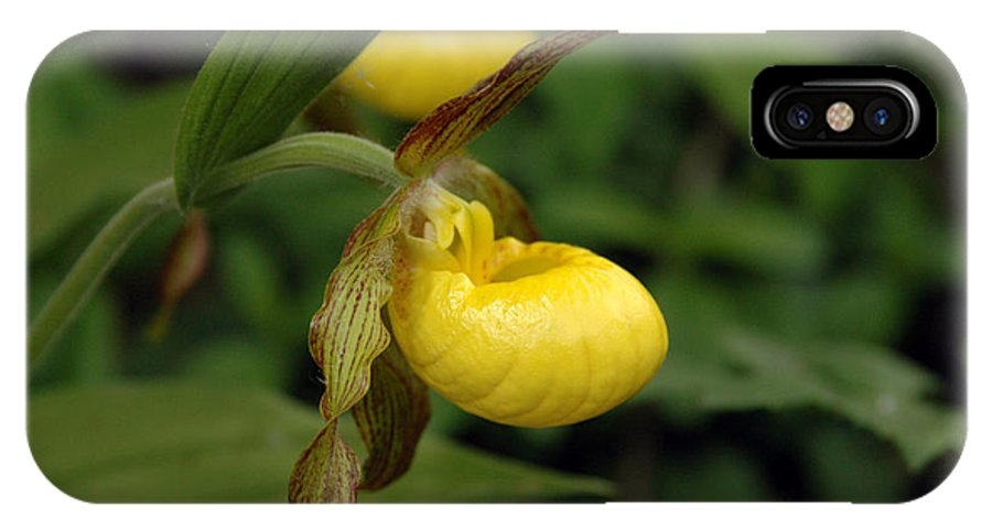 Ladyslipper IPhone Case featuring the photograph Lady Slipper by Kathy Schumann