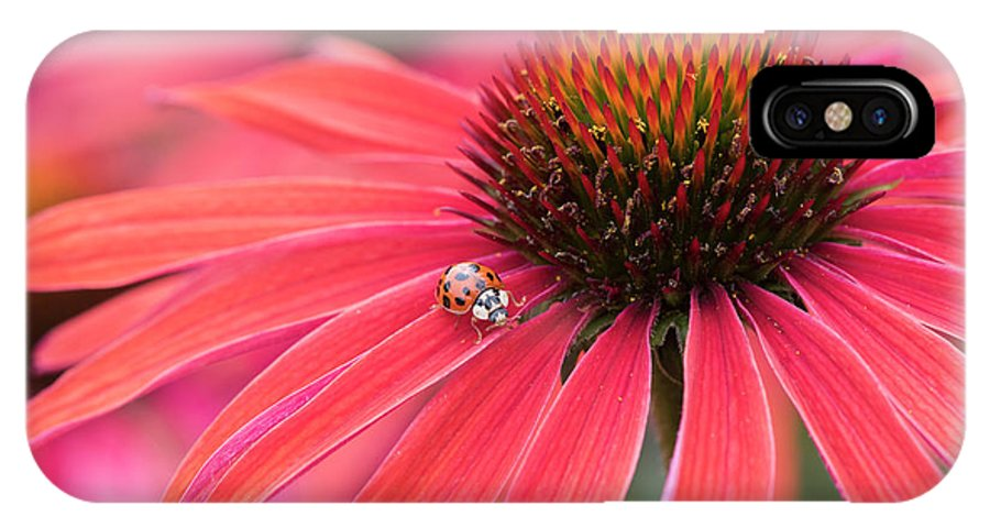 Echinacea Hot Summer IPhone X Case featuring the photograph Ladybird And Echinacea by Tim Gainey