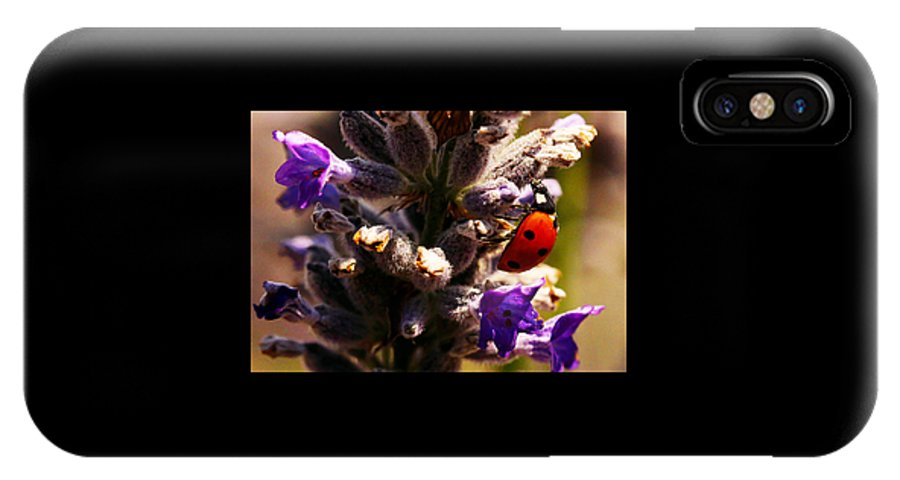 Lady Bug IPhone X Case featuring the photograph Ladybug by Brie Laridon