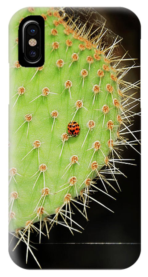 Landscape IPhone X Case featuring the photograph Ladybug On Cactus by Javier Flores