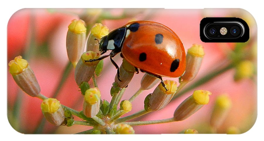 Ladybug IPhone X Case featuring the photograph Ladybug On Fennel by Roger Medbery