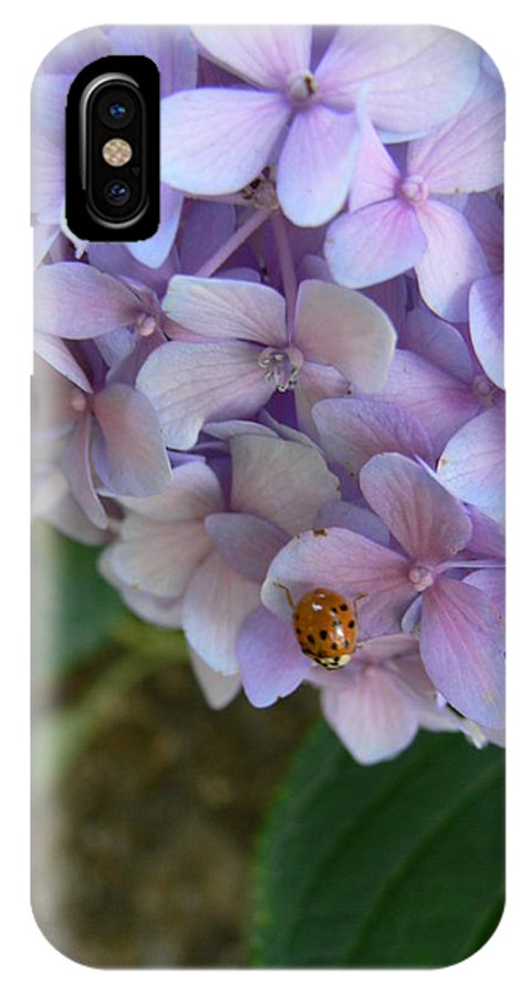 Floral IPhone X Case featuring the photograph Ladybug On Hydrangea by Serina Wells