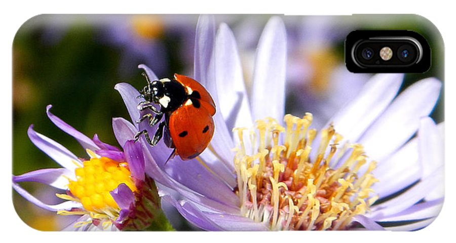 Ladybug IPhone X Case featuring the photograph Ladybug Shows Her Heart by Roger Medbery