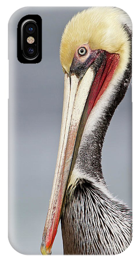 Pelican IPhone X Case featuring the photograph La Jolla Pelican by Bryan Keil