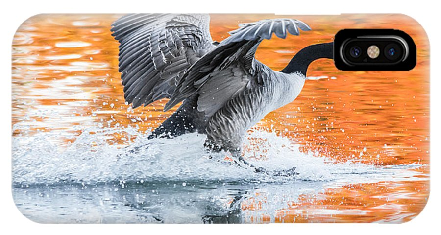 Canadian Goose IPhone X Case featuring the photograph Landing by Parker Cunningham