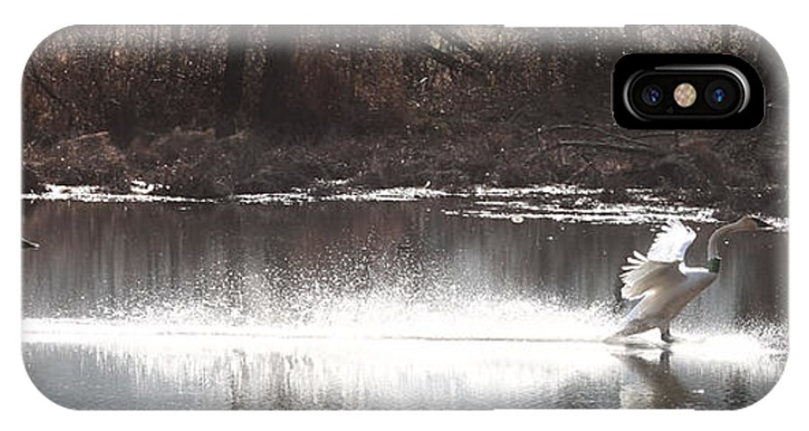 Trumpeter Swans IPhone X Case featuring the photograph Landing Trumpeter Swans by Michael Dougherty