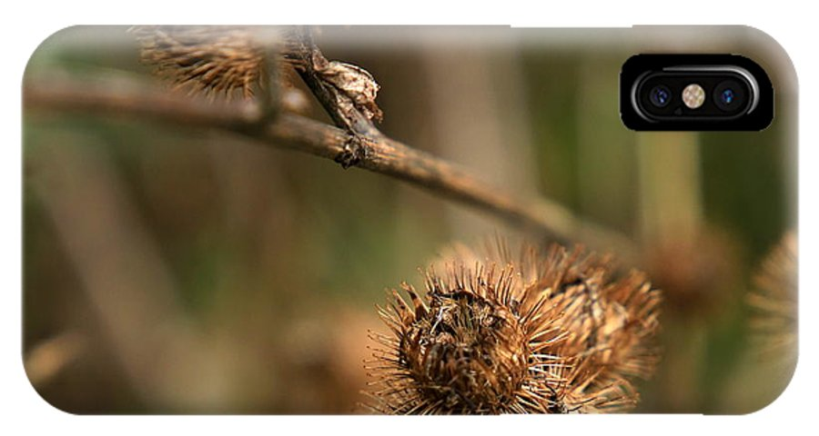 Ladybug IPhone X Case featuring the photograph Last Gasp by Mark Salamon