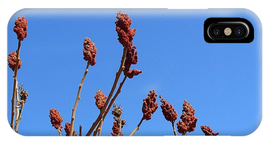 Sky IPhone X Case featuring the photograph Last Year's Sumac by Peggy King