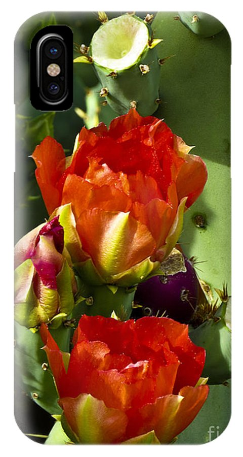 Arizona IPhone X Case featuring the photograph Late Bloomer by Kathy McClure