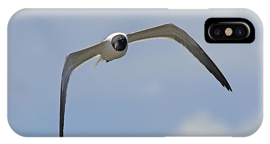 Seagull IPhone X Case featuring the photograph Laughing Gull by Kenneth Albin