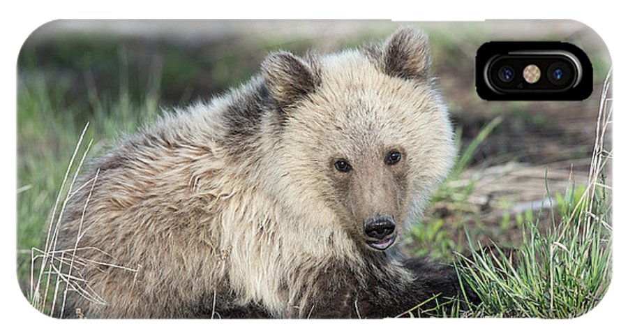 Grizzly IPhone X Case featuring the photograph Lazy Day by Connie Troutman