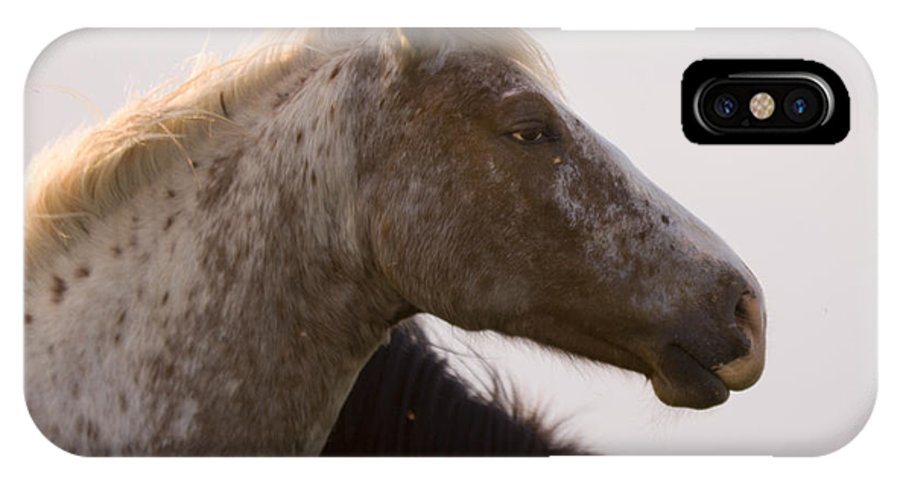 Horse IPhone X Case featuring the photograph Lazy Eye by Angel Ciesniarska