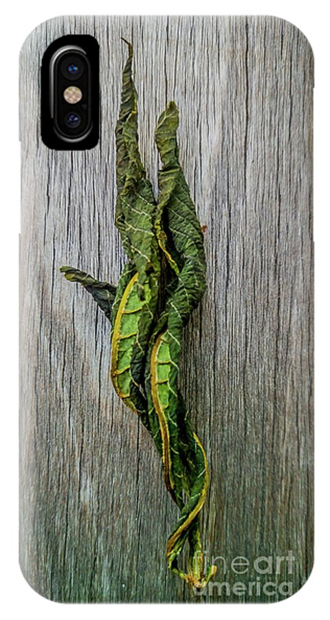 Still Life IPhone X Case featuring the photograph Leaf Entwined by James Aiken