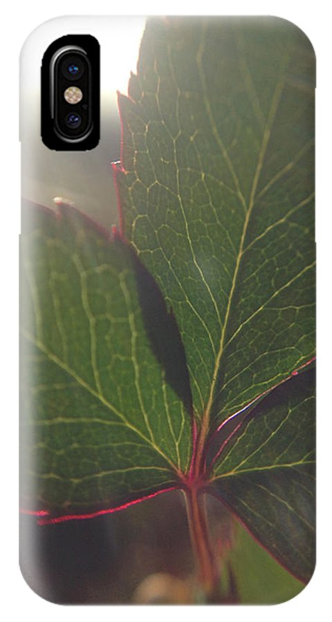 Lens Flare IPhone X / XS Case featuring the photograph Leaf Flare by Michelle Ngaire