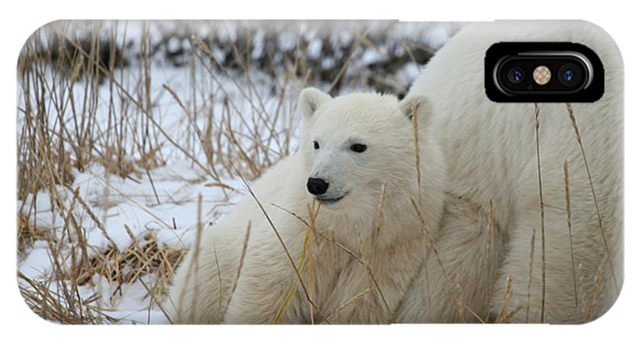 Polar Bear IPhone X / XS Case featuring the photograph Lean On Me by Connie Jeffcoat