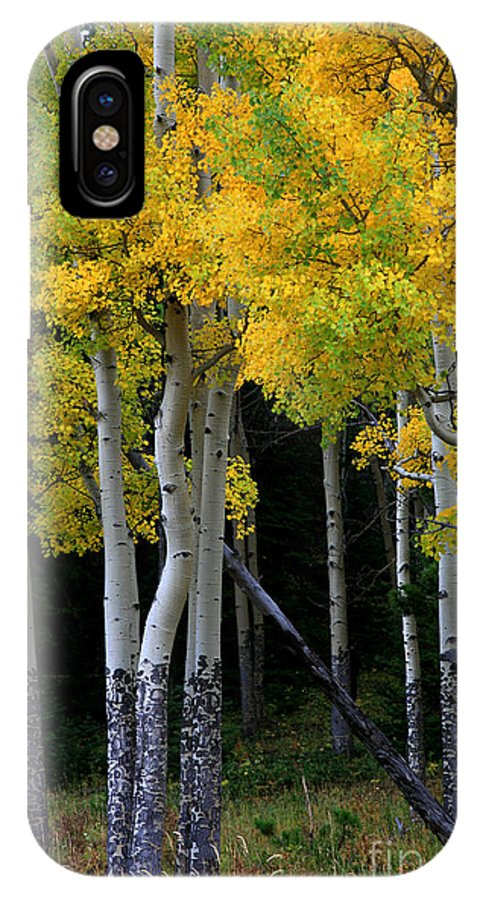 Aspens IPhone X Case featuring the photograph Leaning Aspen by Timothy Johnson