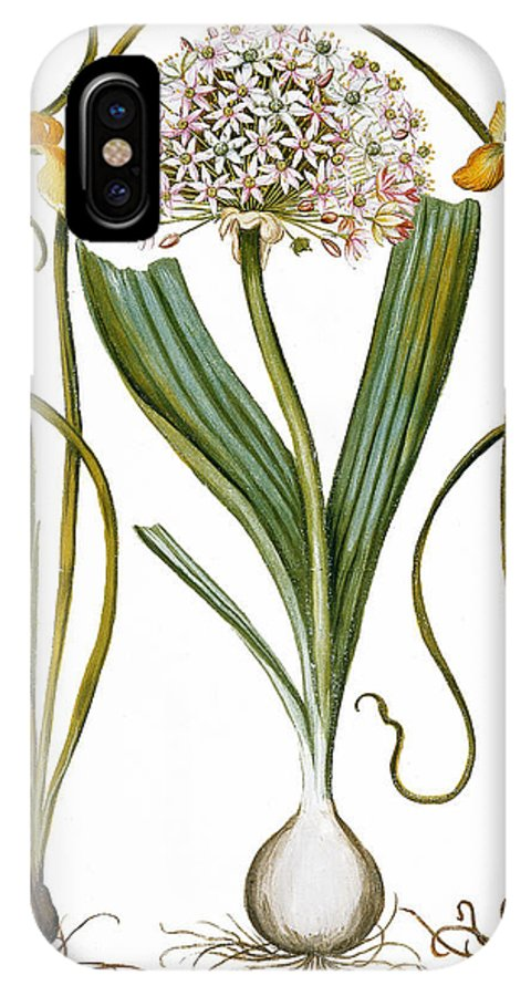 1613 IPhone X Case featuring the photograph Leek And Irises, 1613 by Granger